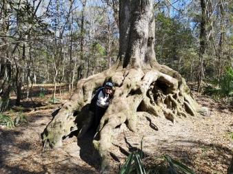 Sharon in the Hiding Tree