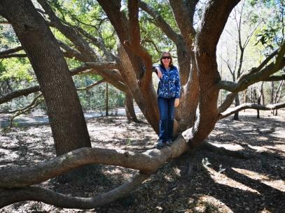 Live Oak trail in 5 Rivers Delta