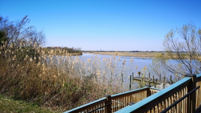 View of 5 Rivers Delta from Nature Center
