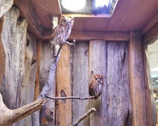 Owls - both had one bad eye