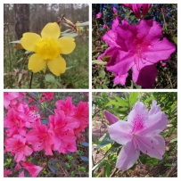 Some of the flowers on the trails in Shepard SP