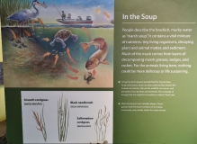 Marsh Soup