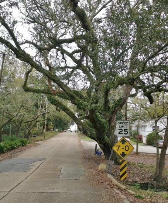 This shows how much they value Live Oaks as there is only a 7 foot clearance, we had to drive on the other side of the road